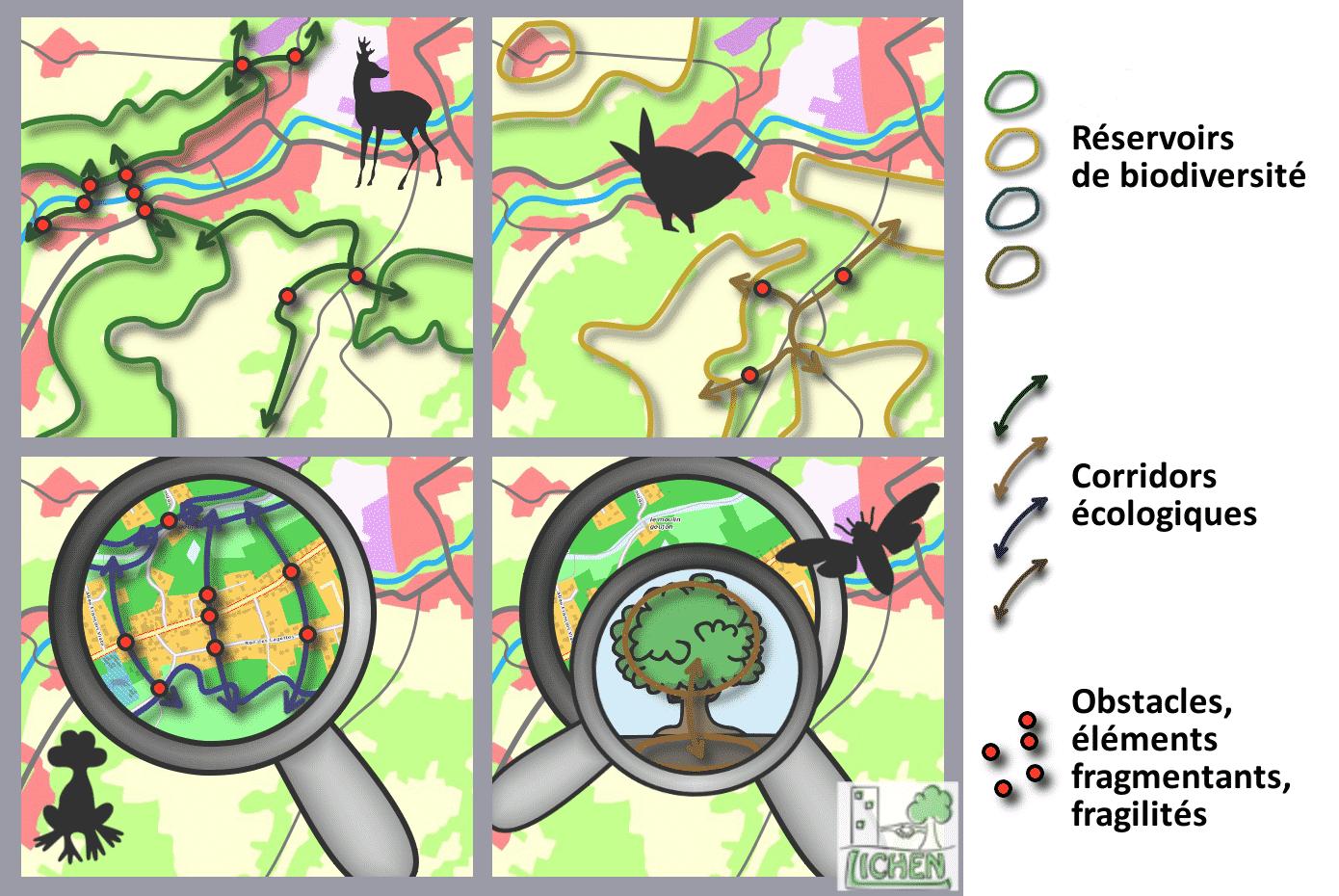 Schéma représentant les échelles de continuités écologiques selon différentes espèces