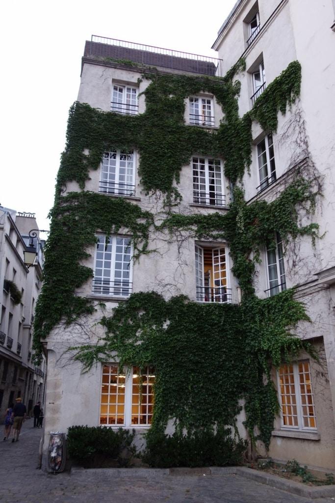 Lierre grimpant sur la façade d'un immeuble