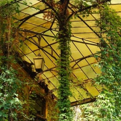 Perron d'une maison couvert de plantes grimpantes