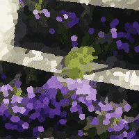 Fleurs violettes