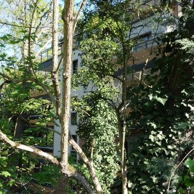 Bâtiment en construction derrière des arbres