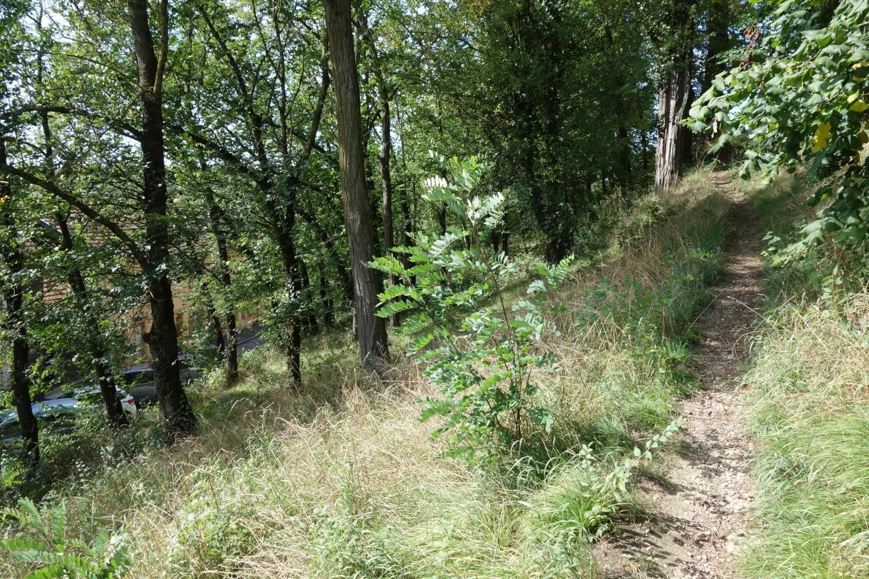 Chemin tracé par le passage des piétons à travers un talus