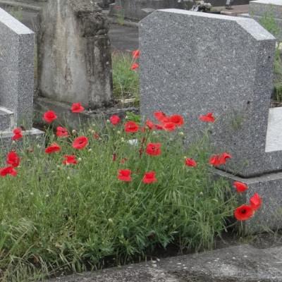 Tombe couverte de coquelicots en fleur
