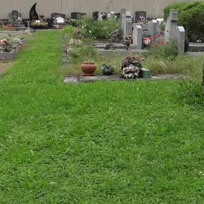 Cimetière enherbé entre les tombes
