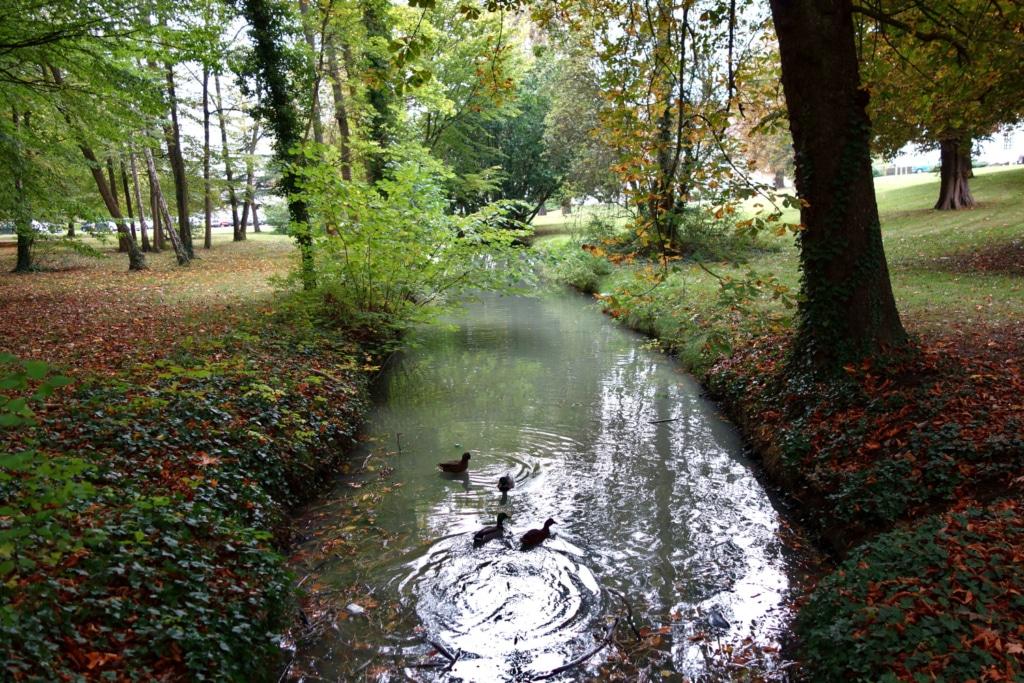 Espace vert urbain à l'ambiance de sous-bois, traversé par une rivière avec des canards