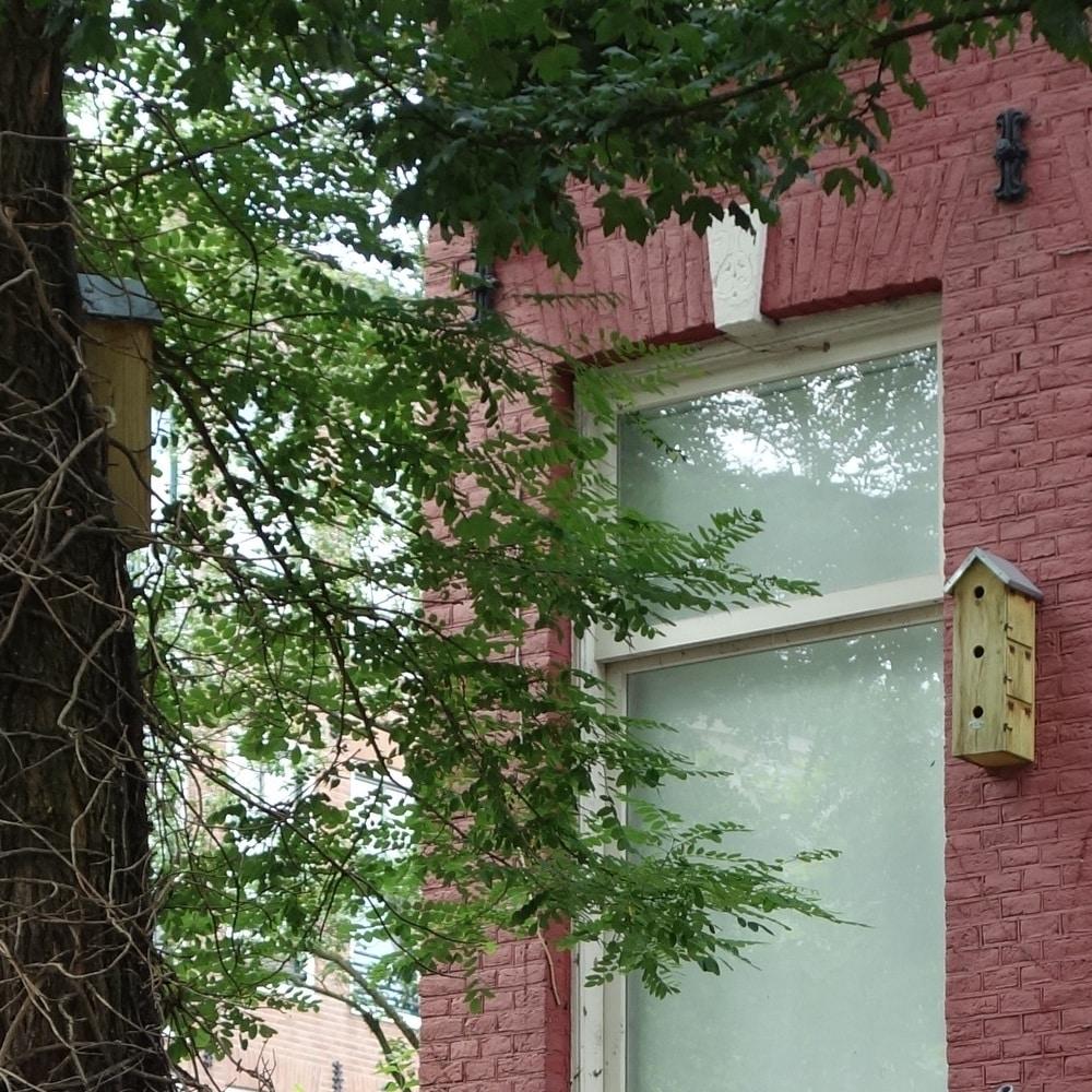 Nichoirs accrochés à un arbre et à un immeuble