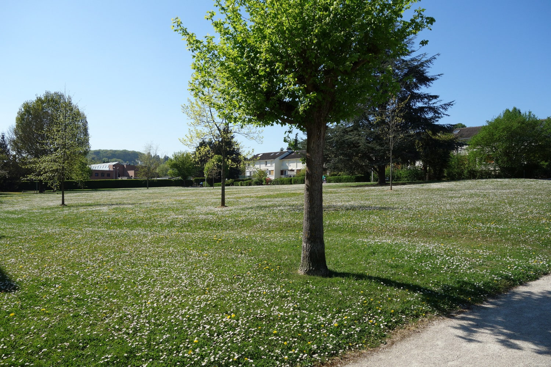 Grande pelouse couverte de pâquerettes