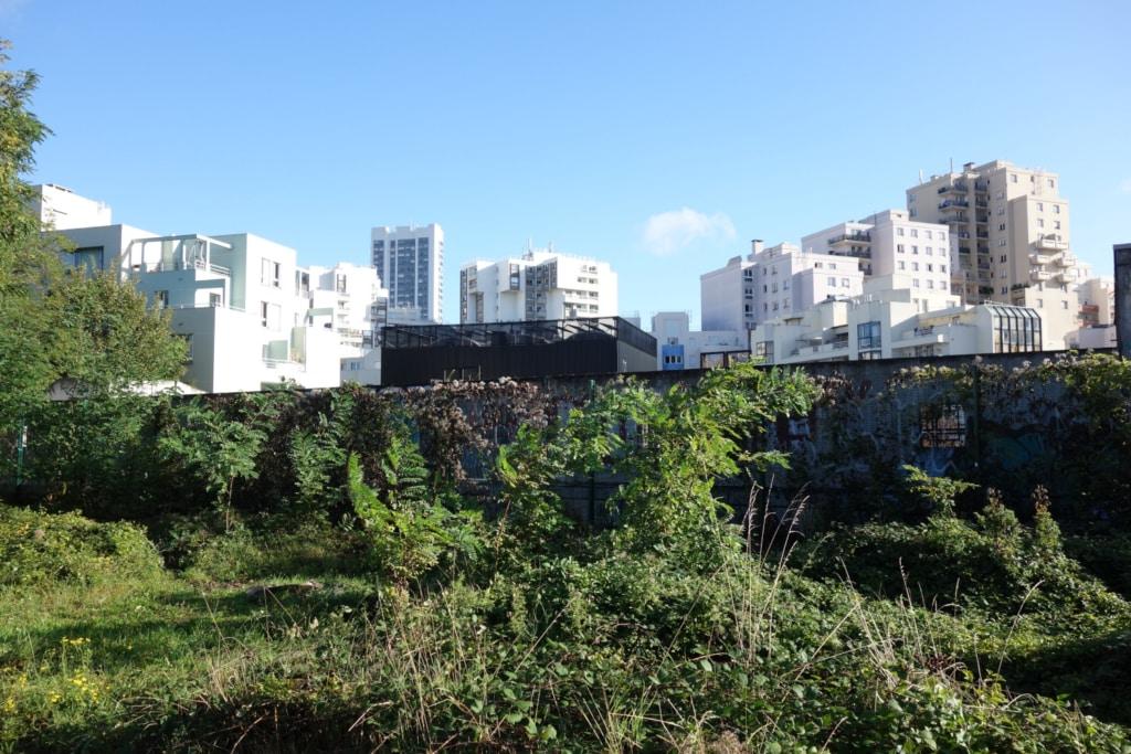 """Emprise ferroviaire de la """"Petite Ceinture"""" parisienne, envahie par la végétation sauvage, et immeubles en arrière-plan"""