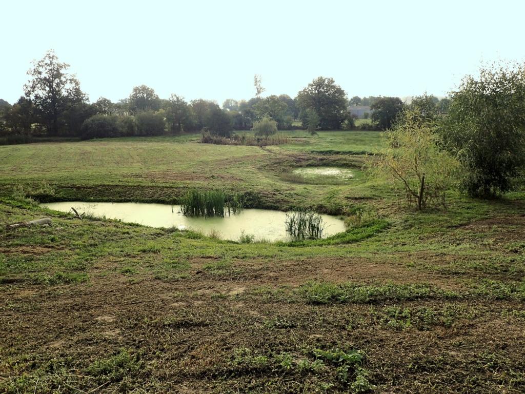 Bassins de lagunage pour la phytoépuration, dans un espace vert