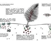 Dessin des mécanismes de dépollution des sols par phytoremédiation