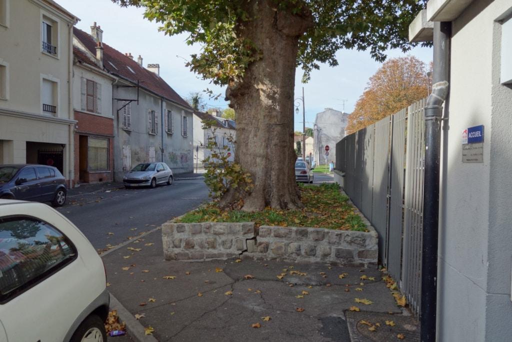 Trottoir fissuré par les racines d'un arbre