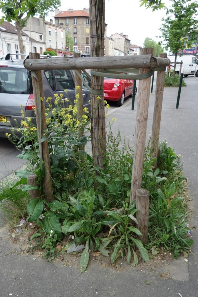 Pied d'arbre d'alignement entouré de plantes et fleurs sauvages