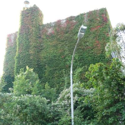 Grande façade recouverte de lierre