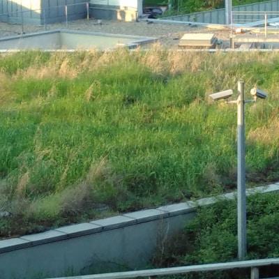 Toiture végétalisée couverte d'herbes hautes