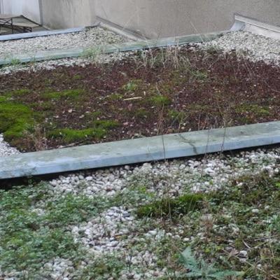 Toitures terrasses de graviers où ont poussé des plantes sauvages